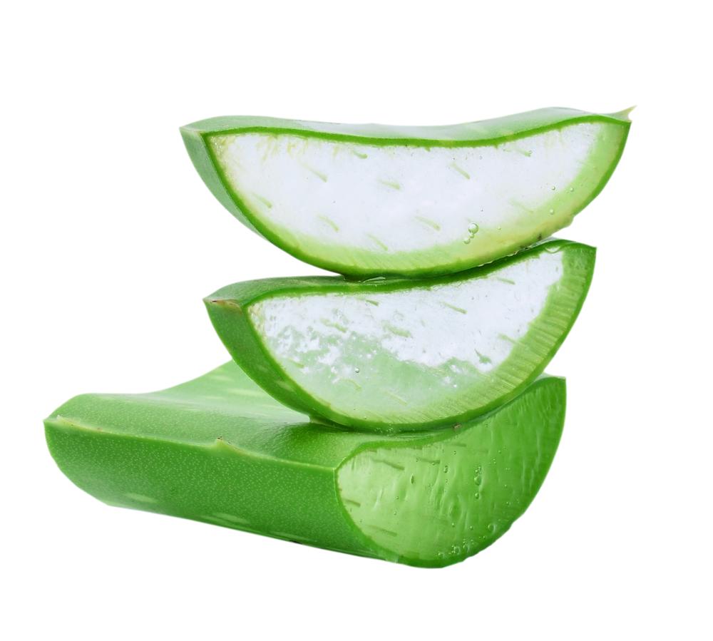 Aloe Vera Has many health benefits 1 is healthier hair and scalp