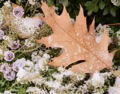 snow-in-the-garden winter